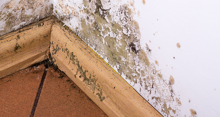 How to Remove Mold from Homes and Businesses | Amerestore
