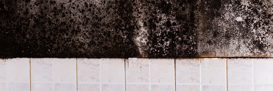 Black mold on wall above tile | Amerestore
